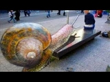 AWESOME 3D STREET ART COMPILATION  2013 ☆ SFB