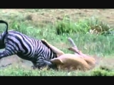 Amazing Animal Hunts In The Wild