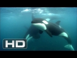 Blackfish – Official Film Clip