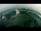 Best Shark Attack Video