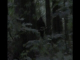 Incredible Bigfoot Footage (2013)