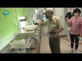 Disinfection & Nanotechnology   , MVX Last Japanese Technology  for Sterilization