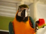 Hilarious Macaw Talking