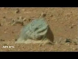 Weird Anomolies Captured By Mars Curiosity 2012 HD