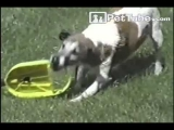 Epic Funny video / Win / Luck Compilation 2012