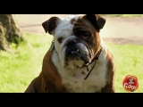 Best of Just For Laughs Gags – Best Dog Pranks