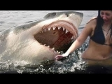 Real! SHARK ATTACKS caught on camera