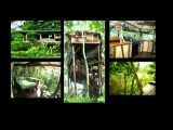 Green Home Designs, Eco Friendly, Sustainable Designs in Costa Rica, Panama Architects