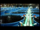 Aquaculture system promises eco-friendly fish farming future