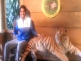 Funny: Guy Is Not Afraid Of Tiger