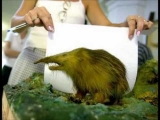 Cool ,rare and new weird animals/species 2011 *HD*