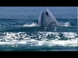 Worlds Largest Blue Whale colony – Discovered in Sri Lanka