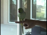 A bird that does the most amazing things ever. A must watch!